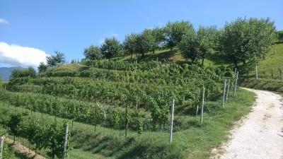 Thumbnail Prosecco wine experience at Toni Doro Winery