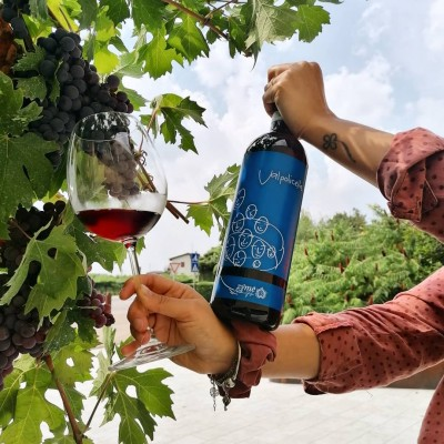 Thumbnail Wine tasting experience at Zyme, a special winery close to Verona