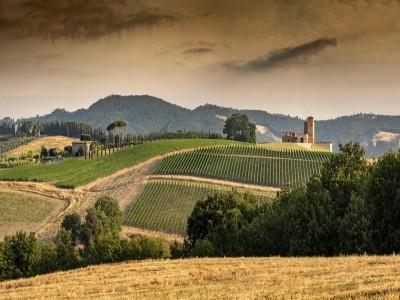 Thumbnail Wine tour & tasting in the heart of Tuscany at Tenuta Monterosola
