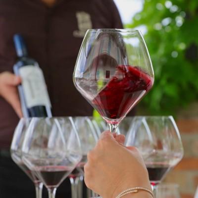 Thumbnail Premium wine tour at Michele Chiarlo Winery
