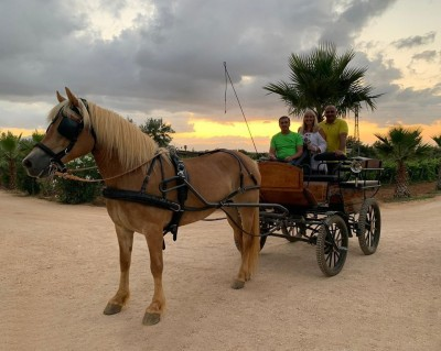 Thumbnail Horse Carriage tour at Augustali Winery