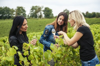 Thumbnail Tour & tasting experience at Champagne Albert Beerens