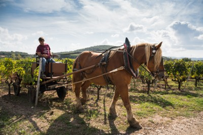 Thumbnail Exclusive Horse Carriage wine tour and tasting at Tenuta Casadei