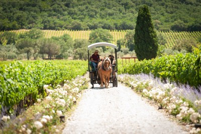 Thumbnail Horse Carriage wine tour and tasting at Casadei Estate