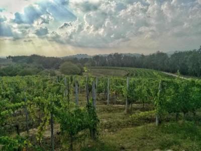 Thumbnail Chianti experience at Villa Saletta