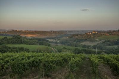 Thumbnail Degustazione di vini nel cuore del Chianti presso la Tenuta Moriano