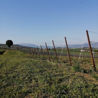 Thumbnail Let a wine family welcome you - Bocale Wine tasting experience