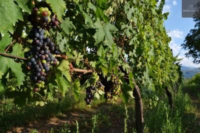 Thumbnail Taste Original Abruzzo mountains wines at Margiotta winery