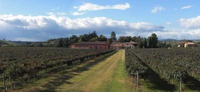 Thumbnail Lambrusco wine experience