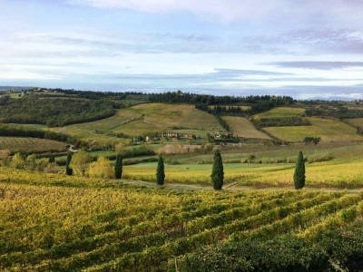 Thumbnail Wine tasting with organic products of Poderi Arcangelo