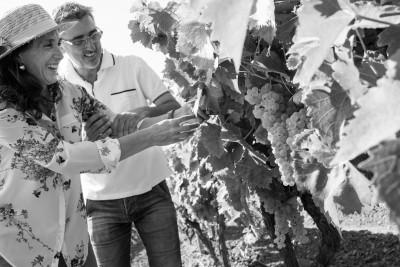 Thumbnail Grape harvest in the lands of Frederik II of Swabia