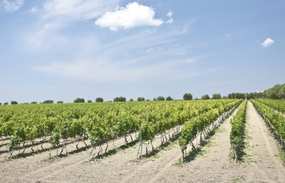 Thumbnail Classic wine tour and tasting at Conti Zecca