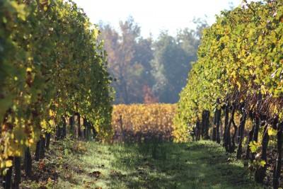 Thumbnail Yoga in the vineyard at La Scolca