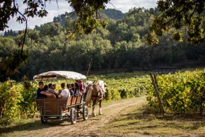Thumbnail Trotting through the vineyards at Cantina di Filippo