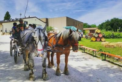 Thumbnail Exclusive trotting through the vineyards at Cantina di Filippo