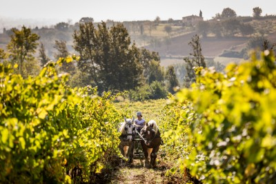Thumbnail Private Trotting through the vineyard and appetizer on board