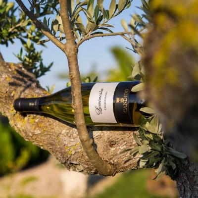 Thumbnail Wine tasting and seafood lunch at Candido Wines in Salento