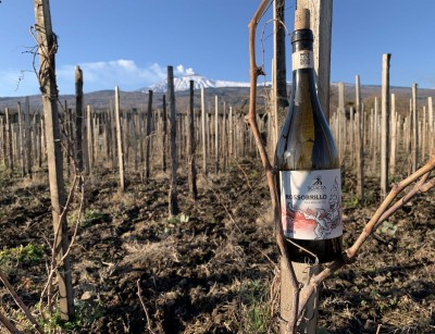 Thumbnail Etna Wine DOC Tasting with Panino at Emilio Sciacca