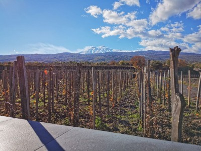 Thumbnail Lunch and Etna Wine Tasting with vineyard tour at Emilio Sciacca
