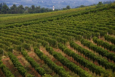 Thumbnail Light brunch and tasting at La Giustiniana Winery