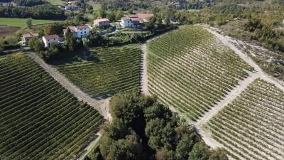 Thumbnail Magda Pedrini's Gavi wine experience