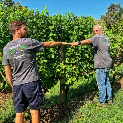 Thumbnail Guided tour and Triple Tasting at Ricci Curbastro winery