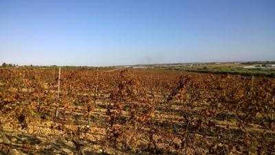 Thumbnail Top wine tasting experience at Terre di Noto