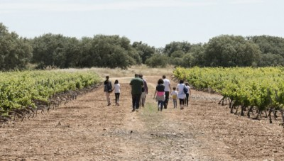 Thumbnail Young Winemakers grow at Zerbosco winery