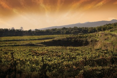 Thumbnail Wine Tour and Superior tasting at Destro Vini winery