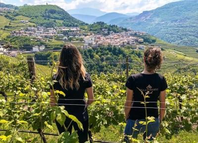 Thumbnail Golden wine experience at Villa Corniole