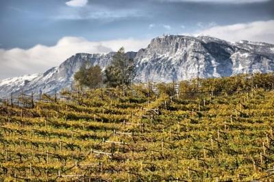 Thumbnail Premium wine experience in Cembra Valley at Villa Corniole
