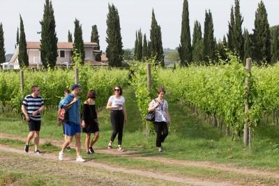 Thumbnail Slow Tasting Tour at Vini del Cavaliere