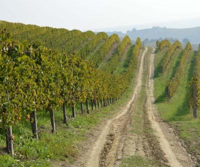 Thumbnail Enjoy Monferrato by Rinaldi Vini