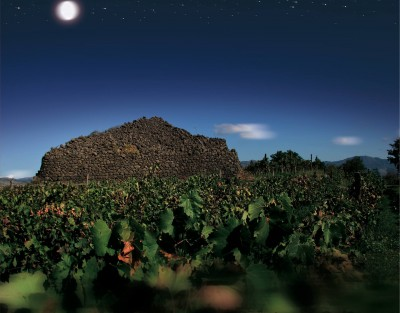 Thumbnail Multisensory journey at Destro Vini winery