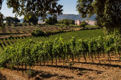 Thumbnail Guided tour and Wine Tasting at Baglio di Pianetto winery
