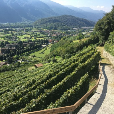 Thumbnail The high vineyards of Lanzato, today Cultivar delle Volte